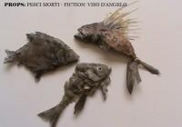 pesci morti